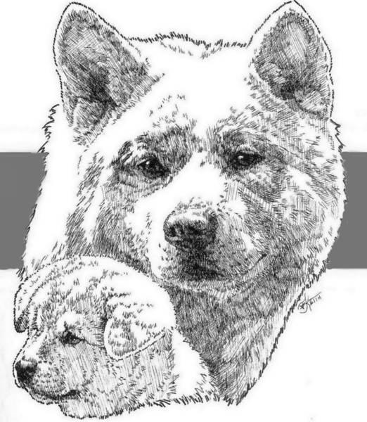 Drawing - Akita Ken And Pup by Barbara Keith