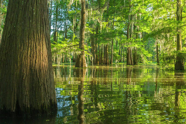 Wall Art - Photograph - Usa, Louisiana, Atchafalaya National by Jaynes Gallery
