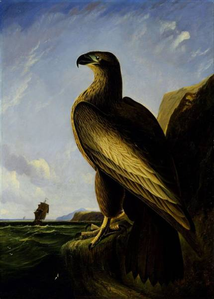 Wall Art - Painting - Washington Sea Eagle, 1839 by John James Audubon