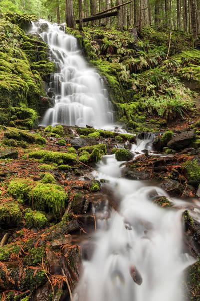 Wall Art - Photograph - White Branch Falls, Oregon Cascades by Adam Jones