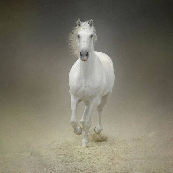 Texture Photograph - White Horse Galloping by Christiana Stawski