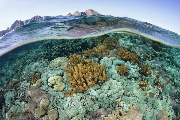Photograph - A Beautiful Coral Reef Thrives by Ethan Daniels