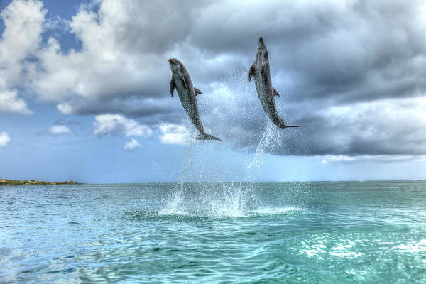 Wall Art - Photograph - Bottlenose Dolphins, Caribbean Sea by Stuart Westmorland