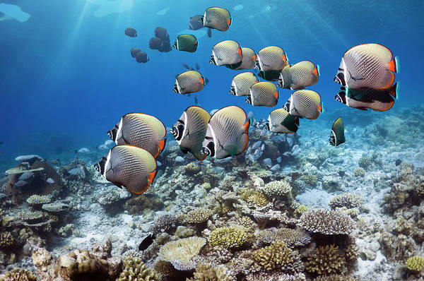 The Maldives Photograph - Coral Reef Scenery by Georgette Douwma