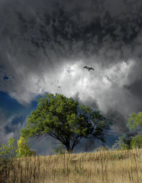 Wall Art - Photograph - 4763 by Peter Holme III