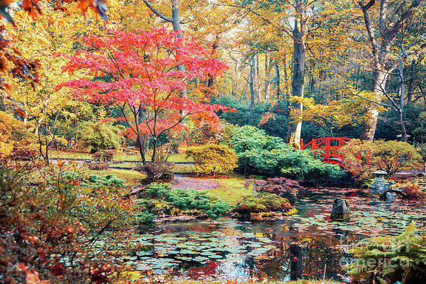 Photograph - autumn in Japanese park by Ariadna De Raadt