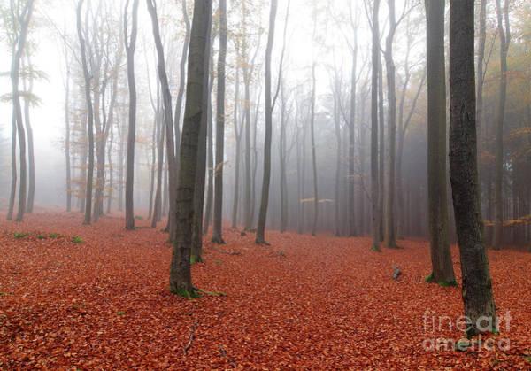 Wall Art - Photograph - Beech Forest In Autumn by Michal Boubin