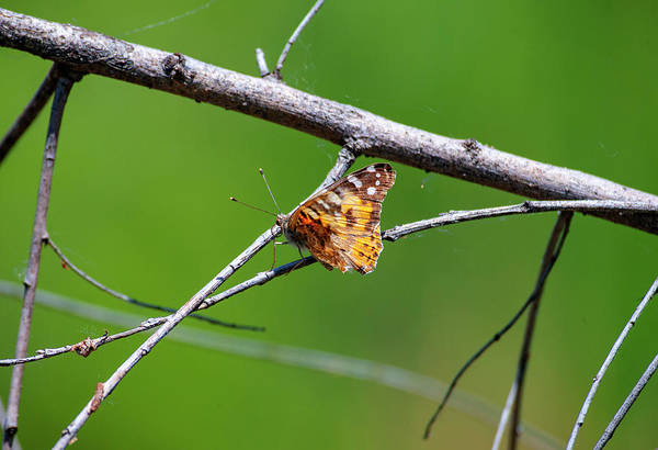 Photograph - Butterfly by Anthony Jones