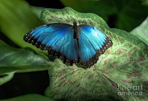 Outdoors Wall Art - Digital Art - Butterfly by Elijah Knight