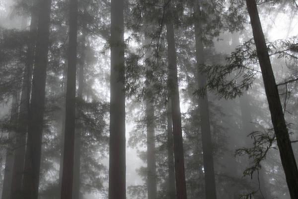 Photograph - 5 Fern Grove Fog N. California by Phyllis Spoor