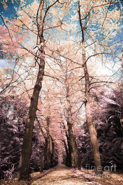Wall Art - Photograph - Ginkgo Biloba Trees by Gaspar Avila