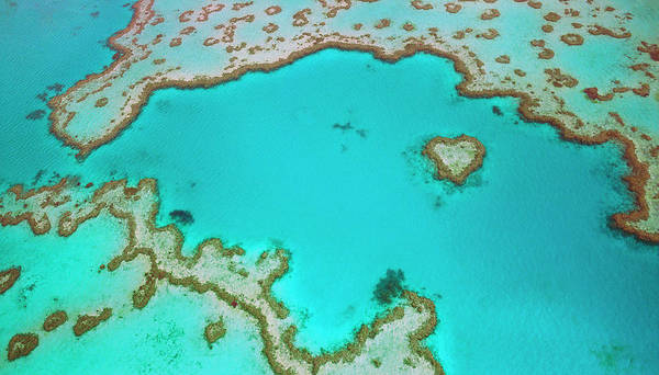 Wall Art - Photograph - Great Barrier Reef, Australia by Australian Scenics