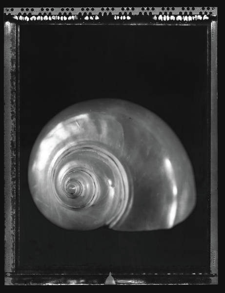 Mother Of Pearl Photograph - Still Life by Wigwam Press