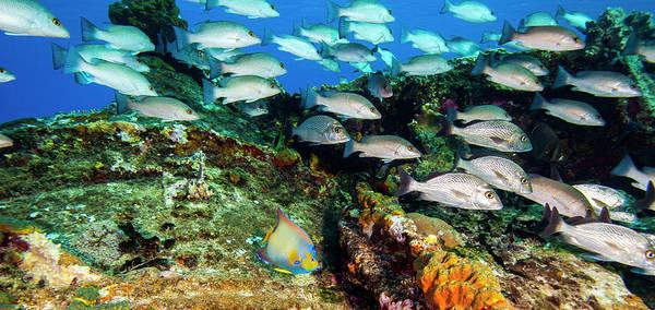 Wall Art - Photograph - Sugar Wreck, Northern Bahamas, Caribbean by Stuart Westmorland