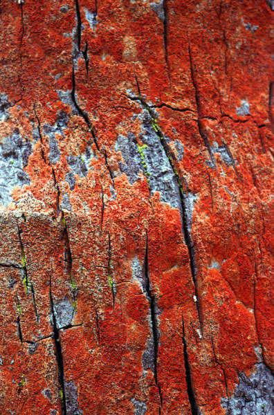 Photograph - Tree Bark by John Foxx