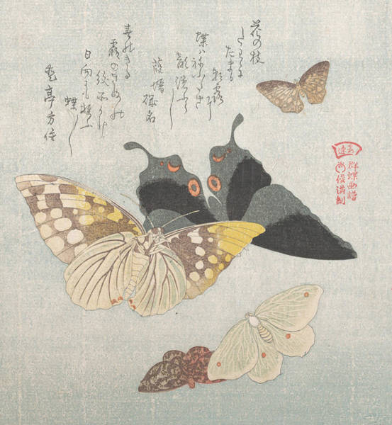 Wall Art - Relief - Various Moths And Butterflies by Kubo Shunman