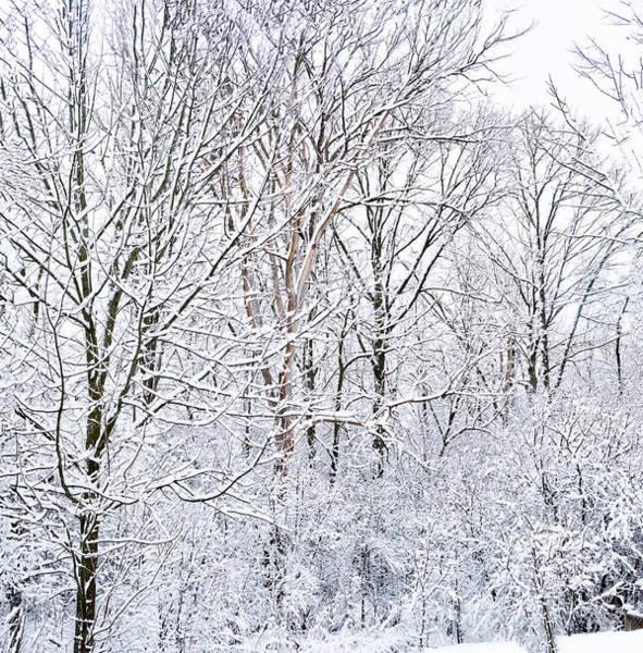 Photograph - Winter Wonderland  by Nick Mares