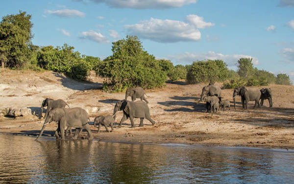 Wall Art - Photograph - Africa, Botswana, Chobe National Park by Jaynes Gallery