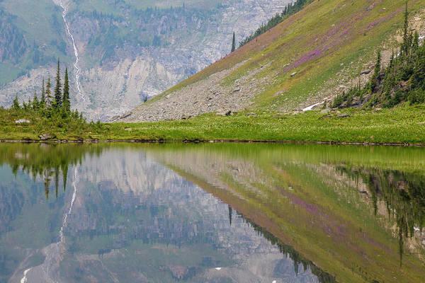 Marmot Photograph - Canada, British Columbia, Selkirk by Jaynes Gallery