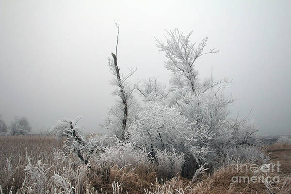 Photograph - Frosty In The Trees by Lori Tordsen