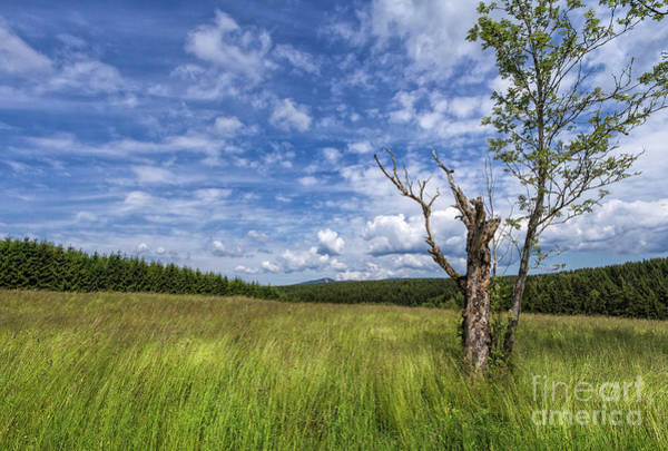 Photograph - The Harz National Park by Bernd Laeschke