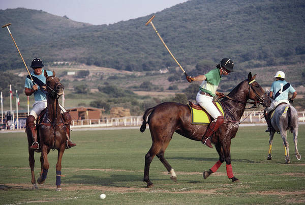 Domestic Animals Photograph - Polo Match by Slim Aarons
