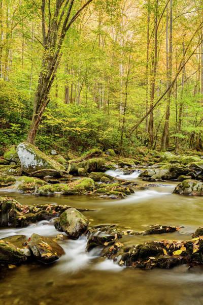 Wall Art - Photograph - Usa, North Carolina, Great Smoky by Ann Collins