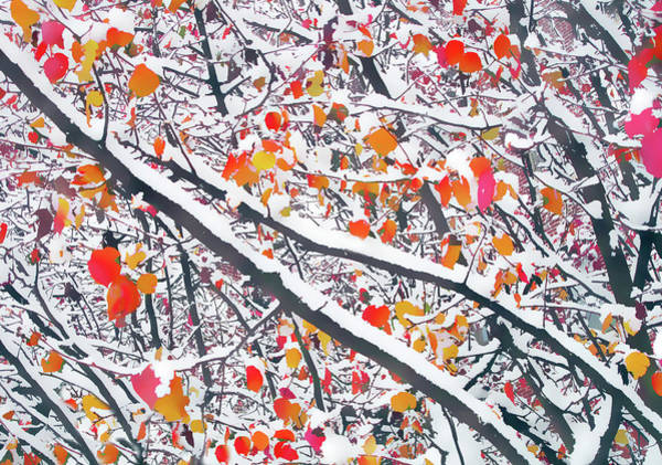Wall Art - Photograph - Snowfall On Autumn Leaves by Jessica Jenney