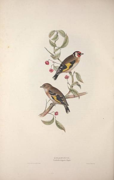 Wall Art - Painting - Different Types Of Birds Illustrated By Charles Dessalines D Orbigny 1806-1876 21 by Charles Dessalines D Orbigny