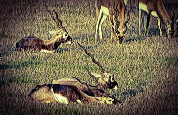 Photograph - Animal by Pandurang Bhondve