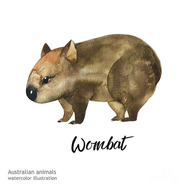 Zoology Wall Art - Digital Art - Australian Animals Watercolor by Kat branches
