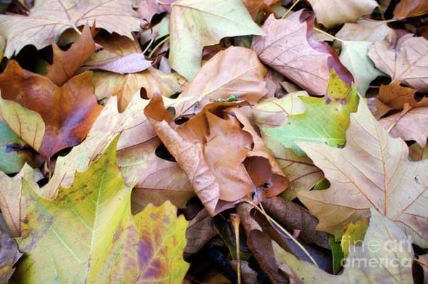 Wall Art - Photograph - Autumn Leaves Background by Tom Gowanlock