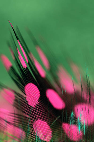 Wall Art - Photograph - Colorful Feather Pattern by Adam Jones