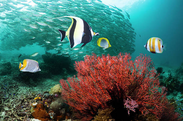 Coral Photograph - Coral Reef With Fish by Georgette Douwma