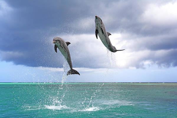 Roatan Photograph - Delfin Grosser Tuemmler by Tier Und Naturfotografie J Und C Sohns