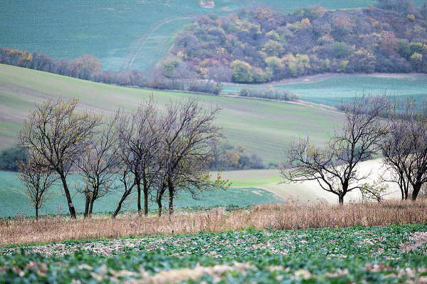 Photograph - Autumn In South Moravia 8 by Dubi Roman