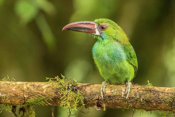 Wall Art - Photograph - Ecuador, Tandayapa Bird Lodge by Jaynes Gallery