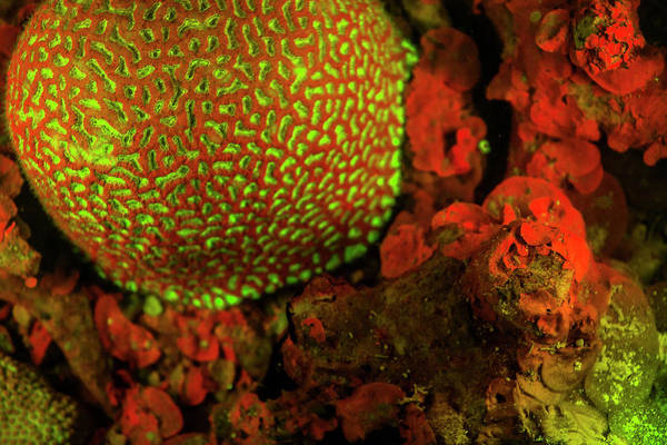 Wall Art - Photograph - Natural Occurring Red And Green by Stuart Westmorland