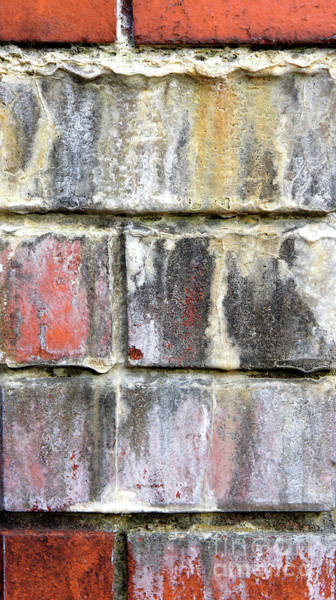 Wall Art - Photograph - Old Brick Wall by Tom Gowanlock