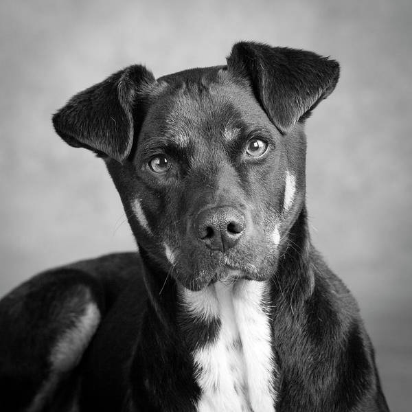 Wall Art - Photograph - Portrait Of A Mixed Dog by Panoramic Images
