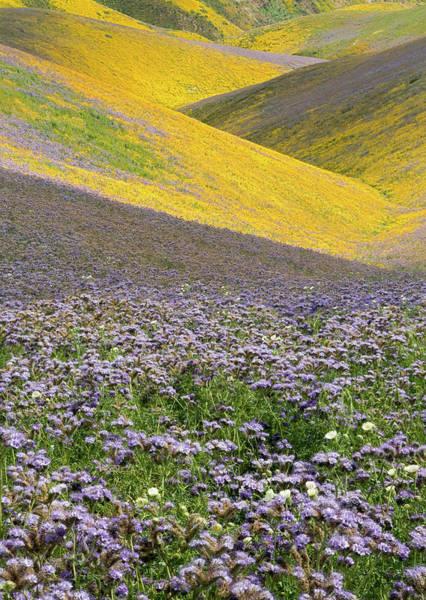 Wall Art - Photograph - Usa, California, Carrizo Plain National by Charles Gurche