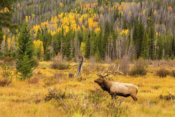 Wall Art - Photograph - Usa, Colorado, Rocky Mountain National by Jaynes Gallery