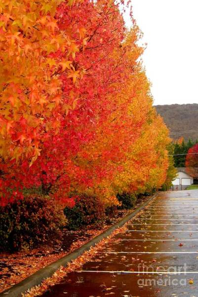 Photograph - 7th Day Fall Glory by Marie Neder