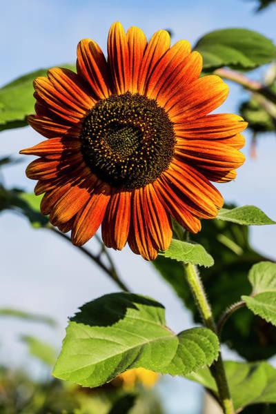 Burnt Orange Photograph - Bremerton, Washington State by Jolly Sienda