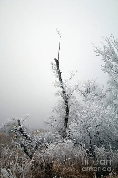 Wall Art - Photograph - Frosty In The Trees by Lori Tordsen