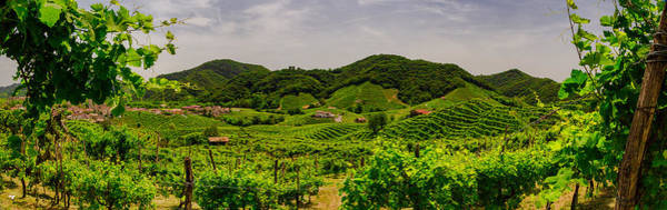 Wall Art - Photograph - Panorama Of The Vineyards Of Prosecco Vineyards by Pavel Rezac
