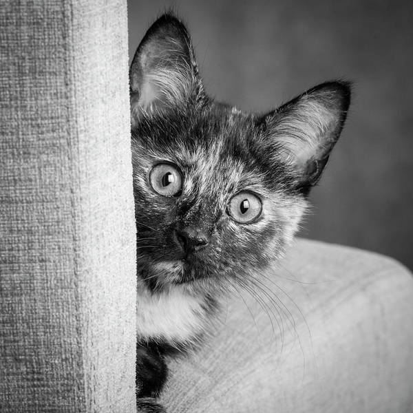 Wall Art - Photograph - Portrait Of A Tortoiseshell Cat by Panoramic Images