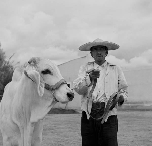 Ranching In Michoacan, Mexico Art Print by Michael Ochs Archives