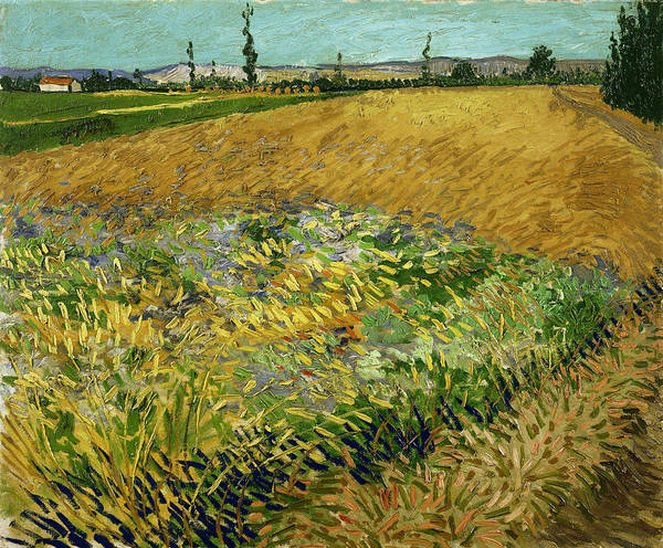 Rural Life Wall Art - Painting - Wheatfield by Vincent Van Gogh