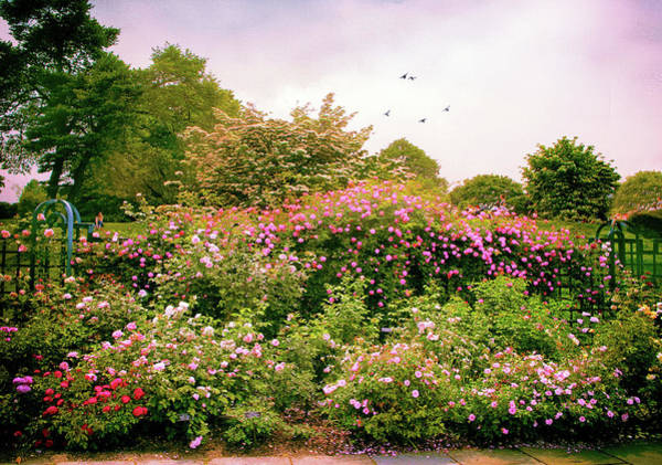 Wall Art - Photograph - Rose Garden Greeting by Jessica Jenney